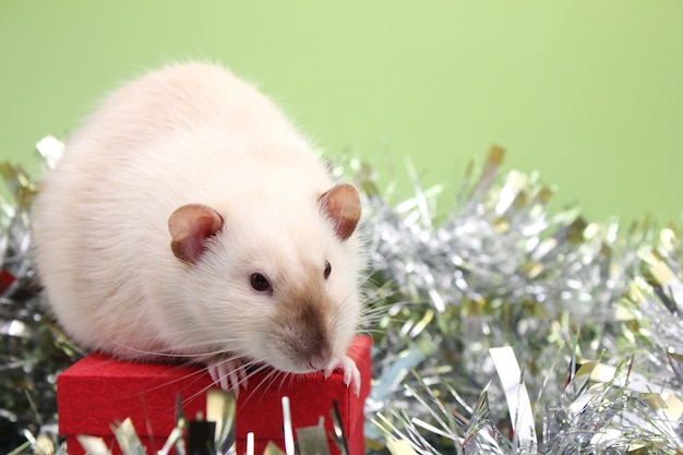 The rat is a symbol of the new year 2020. christmas card.