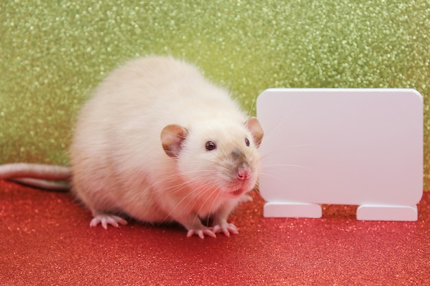 The rat is a symbol of the new year 2020. white plate for writing text