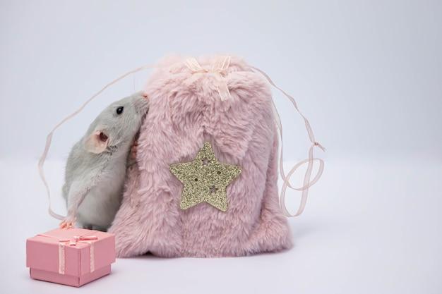 분홍색 모피 가방과 분홍색 선물 상자 근처 쥐