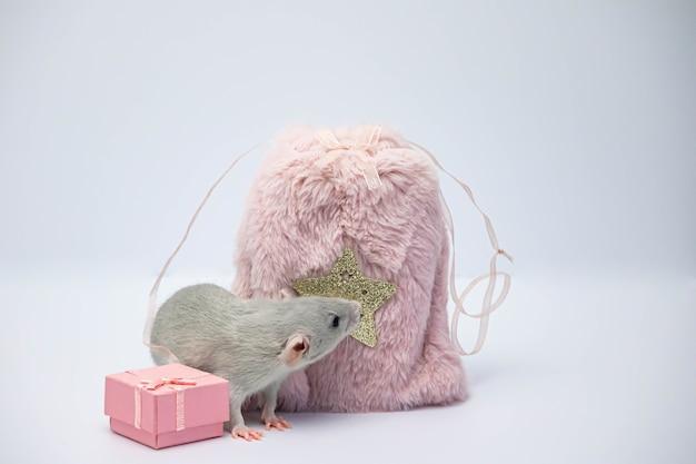 Крыса возле розовой меховой сумки и розовой подарочной коробки