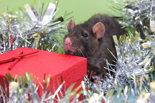 Rat with christmas decoration for chinese new year 2020