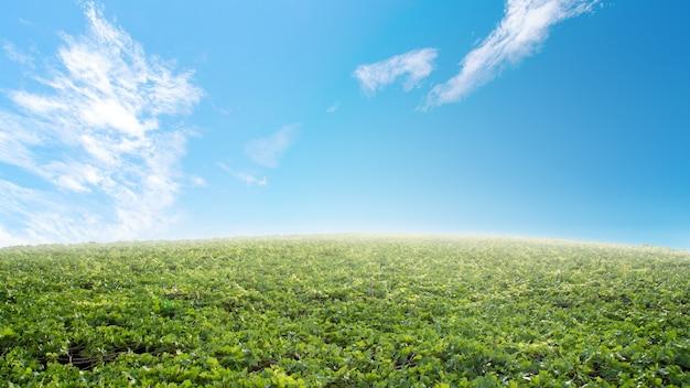 緑色の葡萄はダムヌン・サドゥク(ratchaburi province)に畑があります。タイ