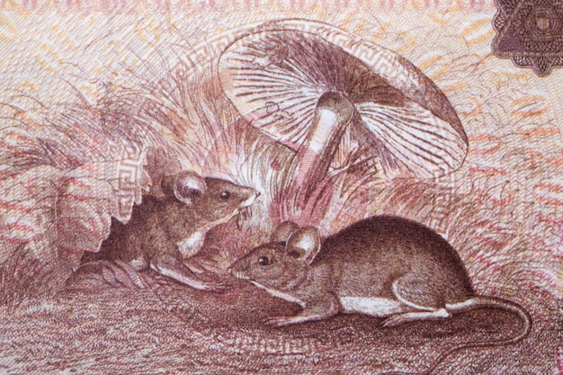 Rats from chinese money