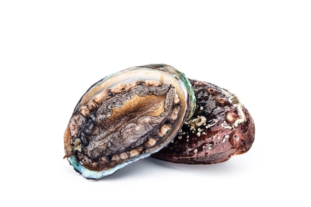 Raw abalones on white Free Photo
