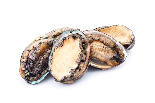 Raw abalones on white