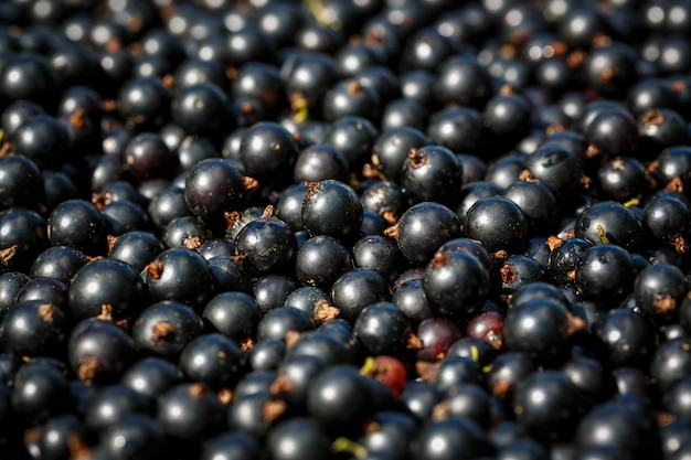 Raw black currant