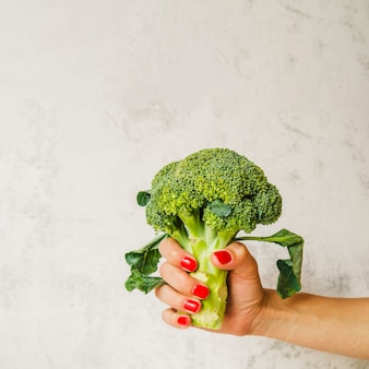 Raw broccoli in woman's hand on white wall background