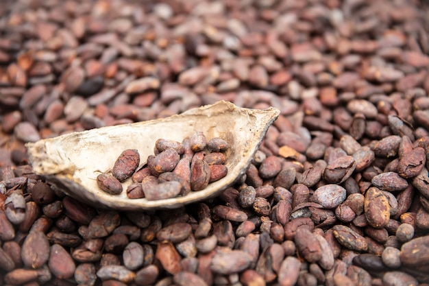 Raw cacao beans and pod