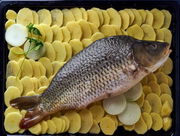 Raw carp, whole fish with sliced potatoes on tray on blue . tr