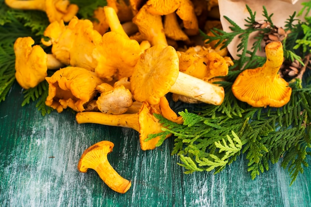 Raw chanterelles over wooden background