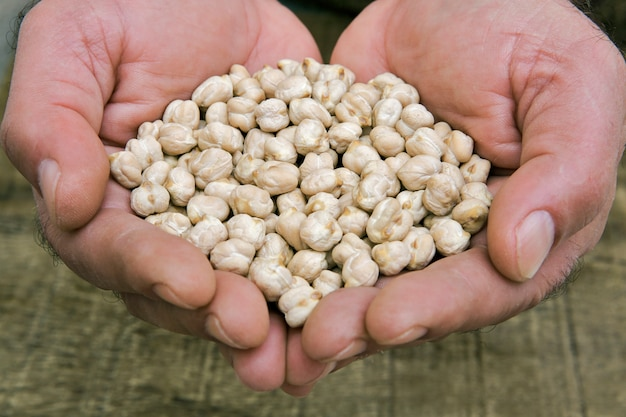 Raw chickpeas in cupped hands of man