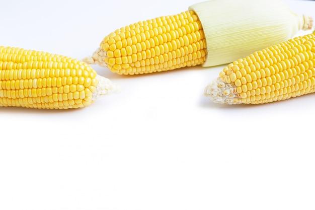 生のトウモロコシの穂軸