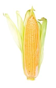 白い背景に緑の葉を持つ生のトウモロコシ。 Premium写真