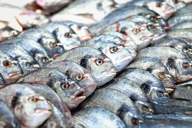 魚市場での生のドラド魚(ヨーロッパヘダイ、sparusauratus)