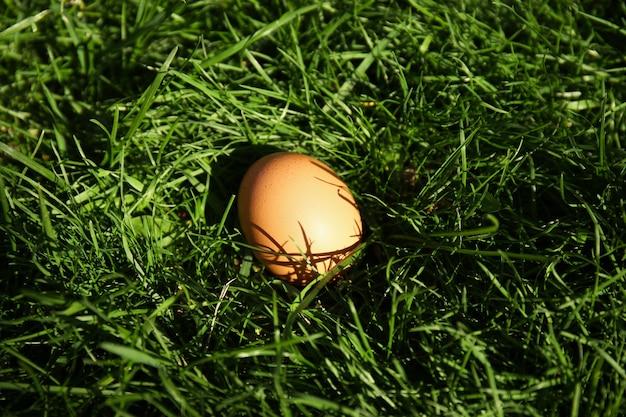 녹색 잔디 표면에 날 달걀