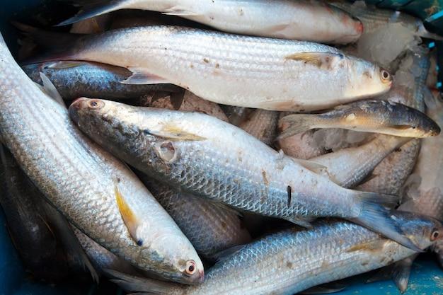 Raw fish on  counter