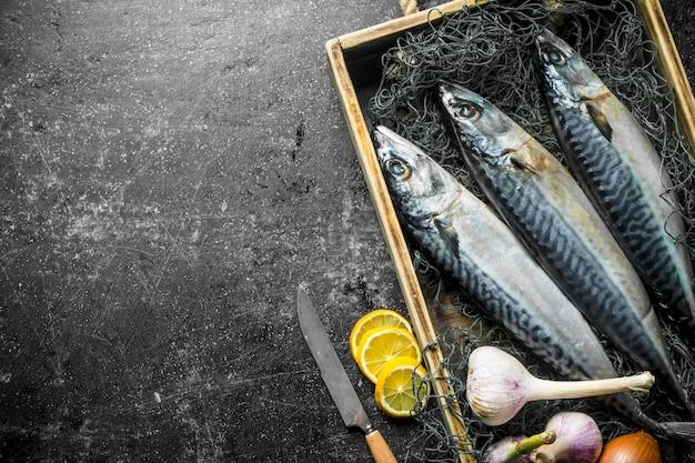 Raw fish mackerel on tray with fishing net, garlic and sliced lemon. on dark rustic surface
