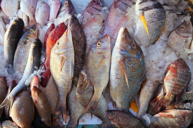 Raw fish on market