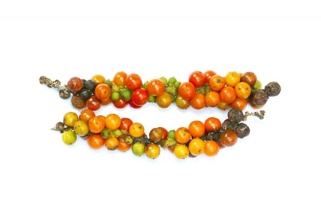 Сырой свежий и сухой перец красочный многоцветный изолированные