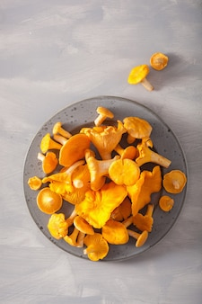 Raw fresh chanterelle mushrooms on gray background
