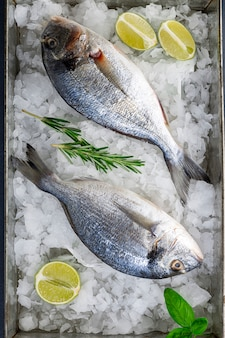 Raw fresh organic dorado or sea bream on ice cubes.