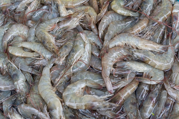 Raw fresh shrimp, prawn on ice sell in market