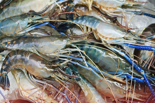 Raw giant freshwater prawn