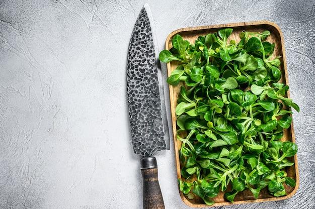 원시 녹색 양 양상추 옥수수 샐러드는 나무 쟁반에 둡니다. 흰 바탕. 평면도. 공간을 복사합니다.