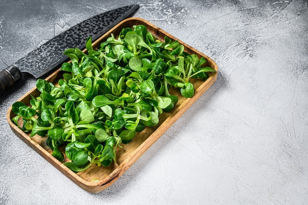 Raw green lambs lettuce corn salad leaves in a wooden tray