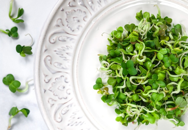 Raw green organic radish or daikon microgreens