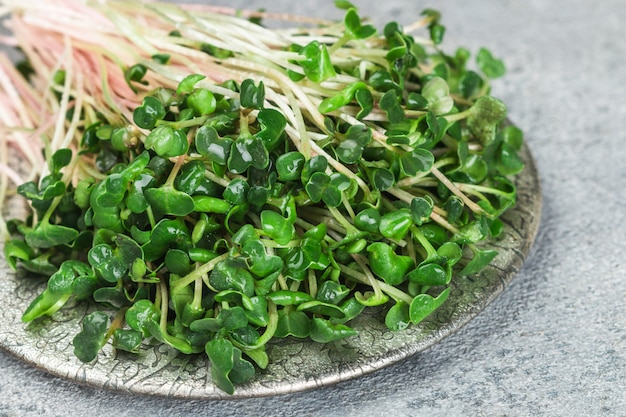 Raw green organic radish or daikon microgreens