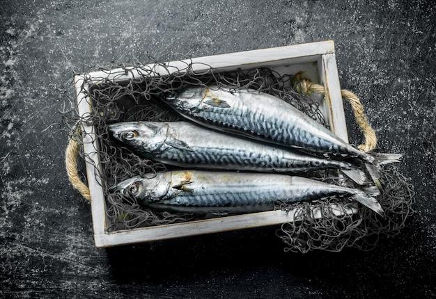 Raw mackerel with fishing net on tray. on dark rustic surface