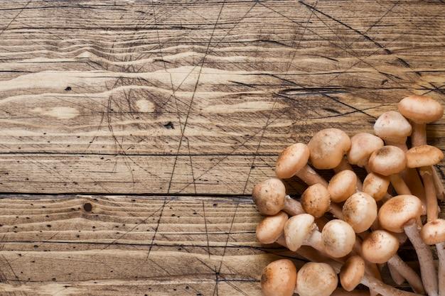 Raw mushrooms agaric honey