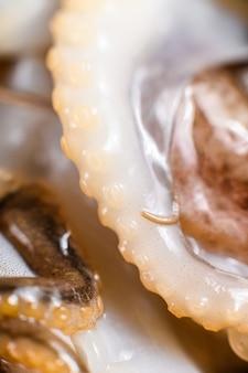 Сырой осьминог. органические морепродукты. закройте черный фон. вид сверху