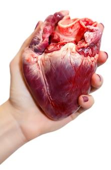 여자 손에 생 돼지고기 심장