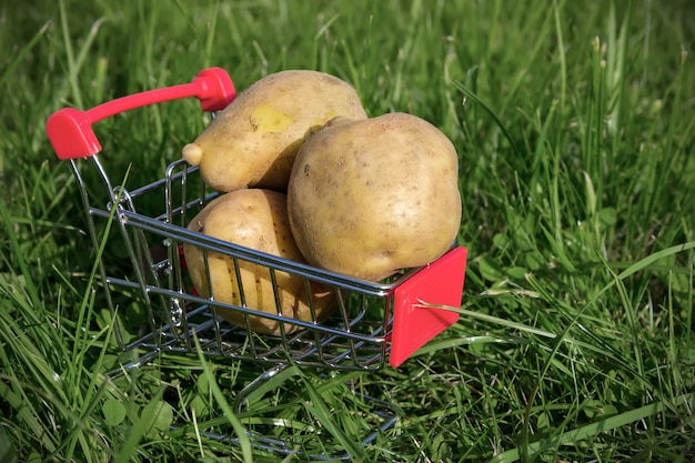 Raw potatoes in a shopping cart on natural green background.