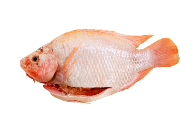 Raw red tilapia fish prepared ready for cook