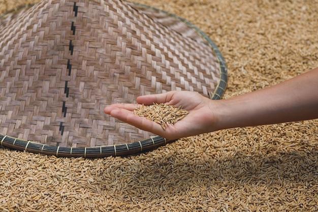 여성의 손에 원시 익은 쌀 곡물