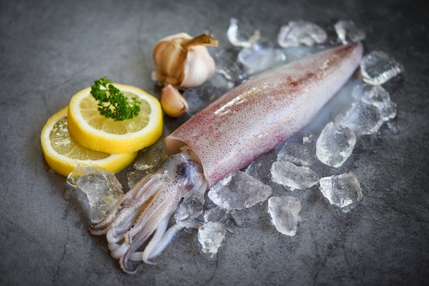 Raw squid on ice with salad spices lemon garlic on the dark plate background - fresh squids octopus or cuttlefish for cooked food at restaurant or seafood market