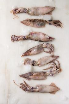 Raw squids calamari