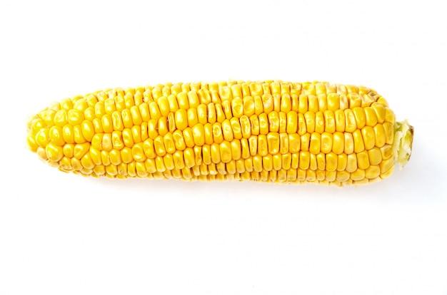 Raw sweet corn cob on white