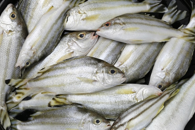 Raw trumpeter or grunter fish of ingredients for cooking.