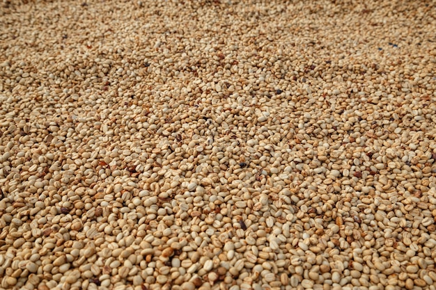 Raw, unroasted white coffee beans