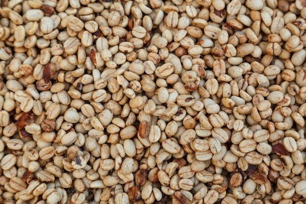 生の未焙煎のホワイトコーヒー豆