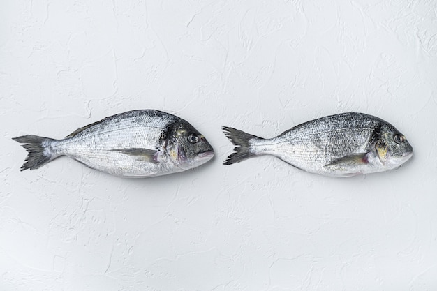 Rawtwo sea bream or gilt head bream dorada fish, top view.