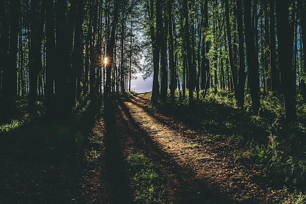 Лучи солнечного света на тропинке в летнем лесу