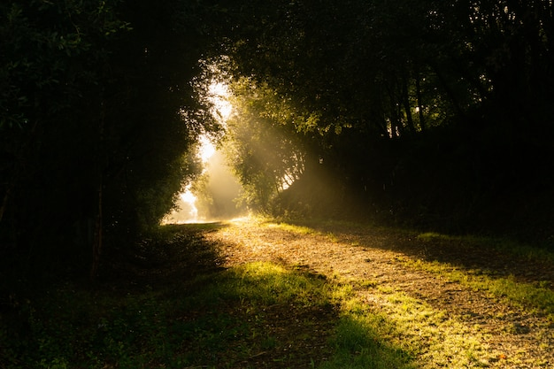 Лучи солнца освещают тропинку посреди леса