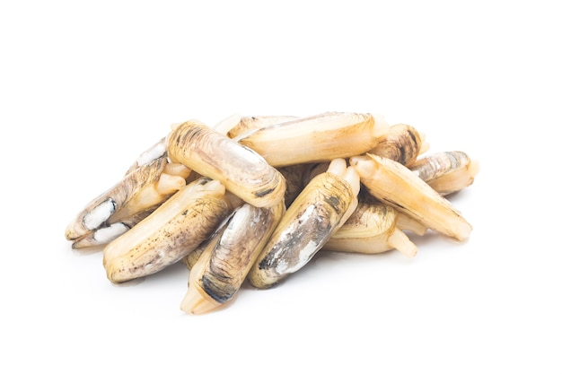 Razor clams isolated on white wall.