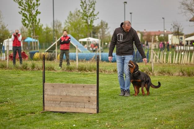 점프 준비: 개가 점프 테스트를 위해 준비된 개 대회