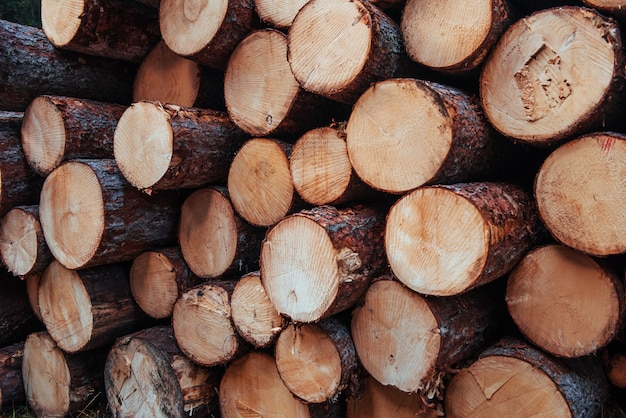 Ready for industry. close up view of the front of many logs. nature background